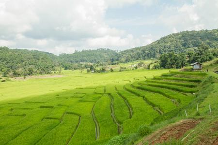 rice terrace: rice terrace Stock Photo