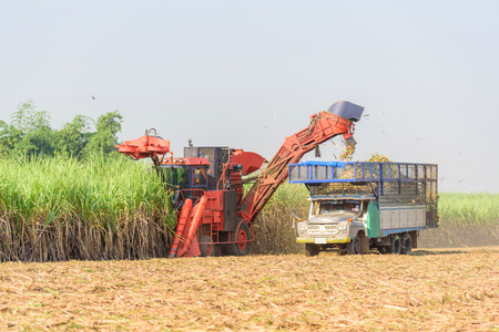 harvest the sugarcane by Sugarcane harvester 版權商用圖片