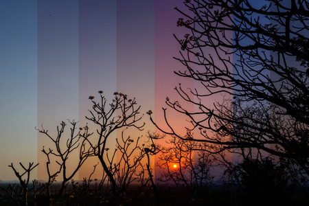 Different shade color of sunset with tree limb Reklamní fotografie