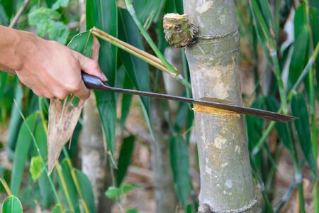 cut down the bamboo trees by chopping knife