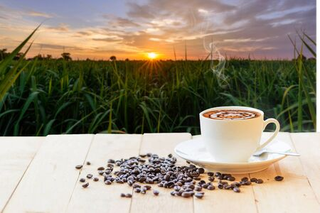 Hot coffee with sugar cane field in sunset time background Stockfoto