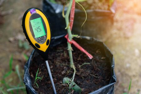 Use soil PH meter for check the PH value Stock Photo