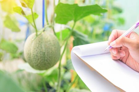 record the melon growth data in farm