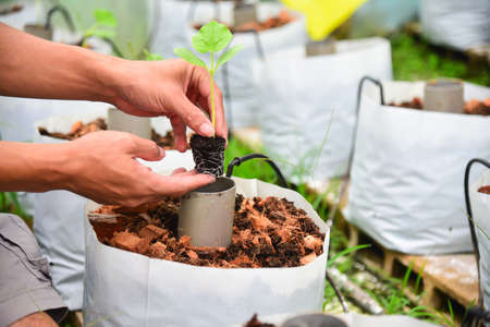 Plant The Sapling of melon in Crop bags