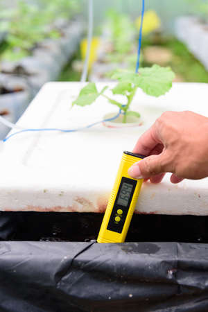 Check pH value of water bin of hydroponics system
