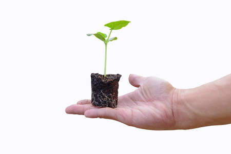 The man hold the green sapling for plant  on white background