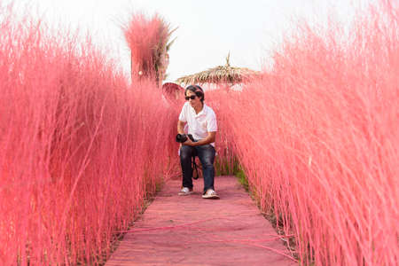 a man sitting at a chair on the ground with pink Hedgerow Backdrop for photo 版權商用圖片