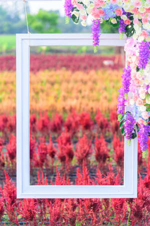 Beautiful colorful Chinese wool Flower park with picture frame