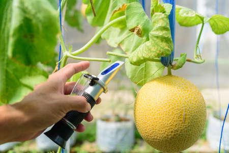 Drop the juice of fresh melon tree for test sweet level 版權商用圖片