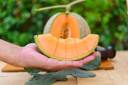 The man show split the orange melon in the hand 版權商用圖片