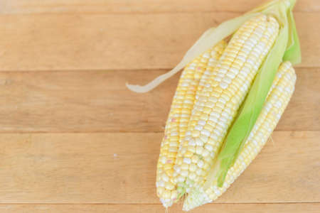 Closeup to Fresh white corn on the corn tree