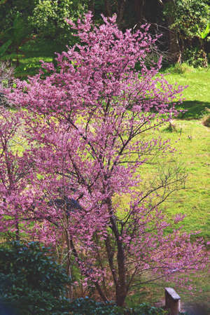 seat under the himalayan cherry tree