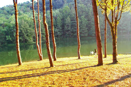 Female tourist walking with white swan along the lake in national park, Mae Hong Son provinces  Thailand