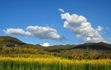 Cloudy skies above mountain range a background of Indian hemp flower Stock Photo - 16857166