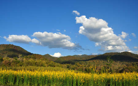 Cloudy skies above mountain range a background of Indian hemp flower