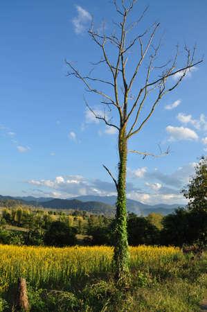 arbre mort: Un arbre mort dans l'abondance de la nature
