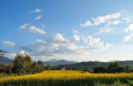 The beautiful yellow of indian hemp field surounded by mountains Stock Photo - 16857164