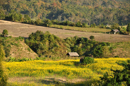 A day rest huts in the indian hemp field Stock Photo