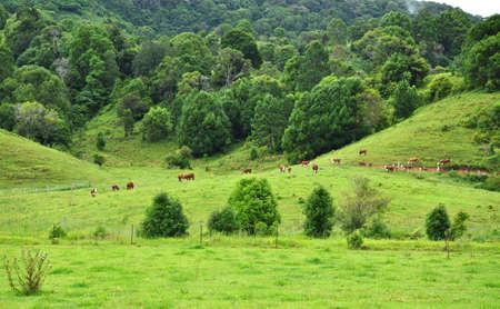 farm landscape in Queensland Australia