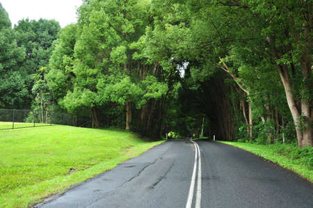 Trees making archway