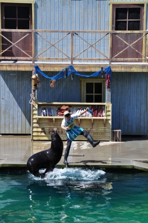 Seaworld on cold coast, Australia, Photo taken at January 2011-Seal lion is performing intune with his trainer in  Seaworld