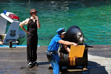 Seaworld on cold coast, Australia, Photo taken at January 2011-Showing a police man holding a board for the sea lion to mouth draw on