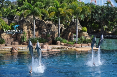 Photo taken at January 2011-Dolphins show jumping  at Seaworld on cold coast, Australia