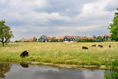 Beautiful dutch houses with meadow landscape and goats at countryside of holland
