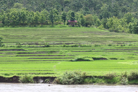 south east asia: Rice Terraces, South East Asia