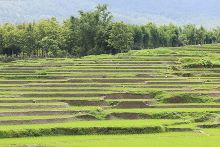 east asia: Rice Terraces, South East Asia