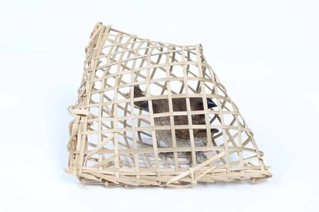 imprison: Bird cage sparrow that people bought to let.