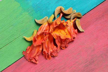 wooden floors: Orange flowers on wooden floors colorful