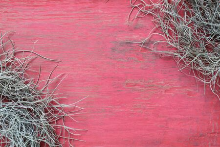 threadlike: Spanish Moss on a wooden red Stock Photo