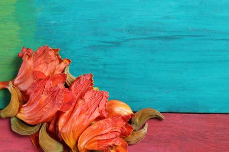 fondo para tarjetas: Flores anaranjadas en suelos de madera de colores