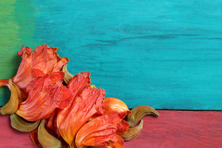 season greetings: Orange flowers on wooden floors colorful