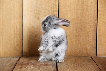 sweet grasses: Gray rabbit on a wooden floor
