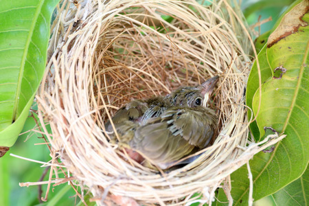Sparrow in the nest