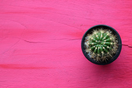 wood flooring: Cactus in a pot on the wood flooring of pink.copy space