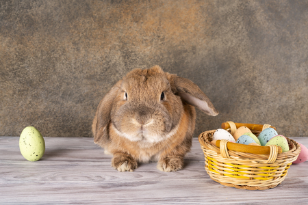 Easter chubby bunny raised his ear. Wicker basket with festive Easter eggs. Spring family holiday.