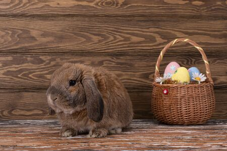 Easter dwarf rabbit breed sheep lies on the parquet. The ginger rabbit is looking at the camera. Basket with eggs.