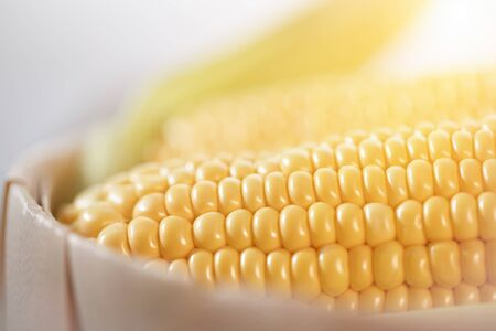 The cob of ripe cut corn sugar lies in a wicker basket. Yellow corn kernels.