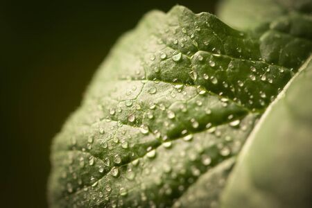 Drops of water on a leaf of a plant. 스톡 콘텐츠