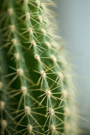 Green cactus with many thorns. 스톡 콘텐츠