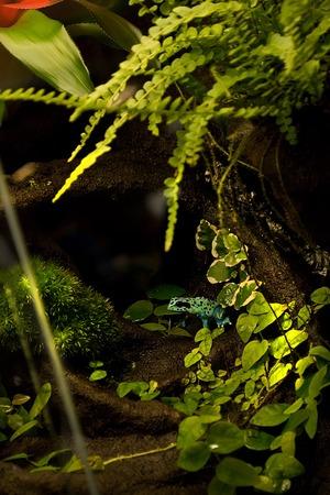 frogs, poisonous, terrariumtropical rain forest terrarium or paludarium for exotic pet animals like poison dart frogs or treefrog.