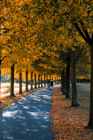 autumn alley in the park, bright autumn colors