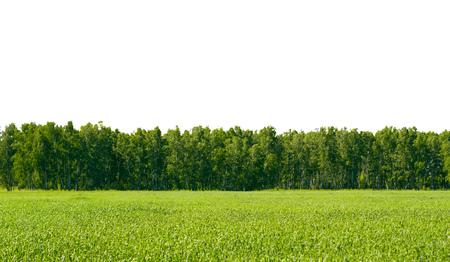 Campo de hierba y bosque de primavera. En el dia Foto de archivo - 109737140