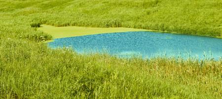 Hermoso estanque verde. Fotografiado durante el día Foto de archivo - 109737092
