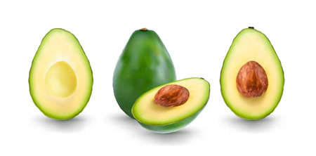 Avocado. Hand drawn watercolor painting. Mesh