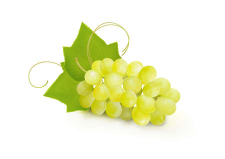 Bunche of grapes on white background. Vector