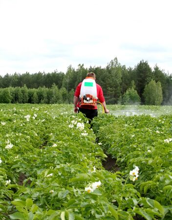 furrow: seasonal treatment of potato crops with chemicals from the Colorado potato beetle on a small agricultural plot Stock Photo